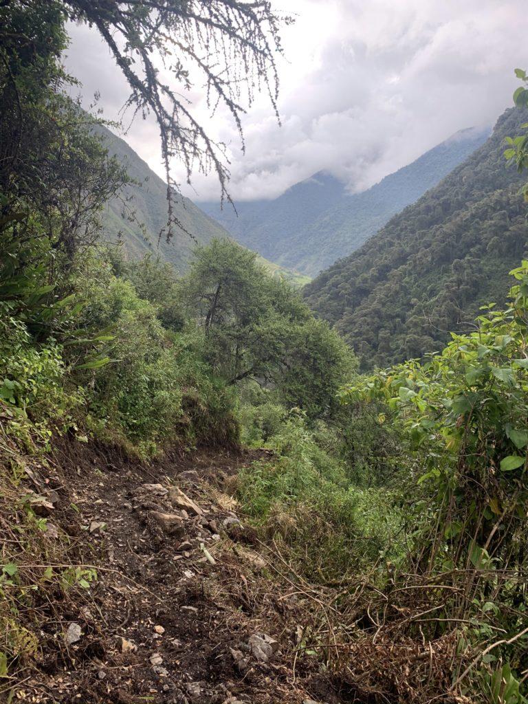 Ein Trampelpfad im peruanischen Dschungel