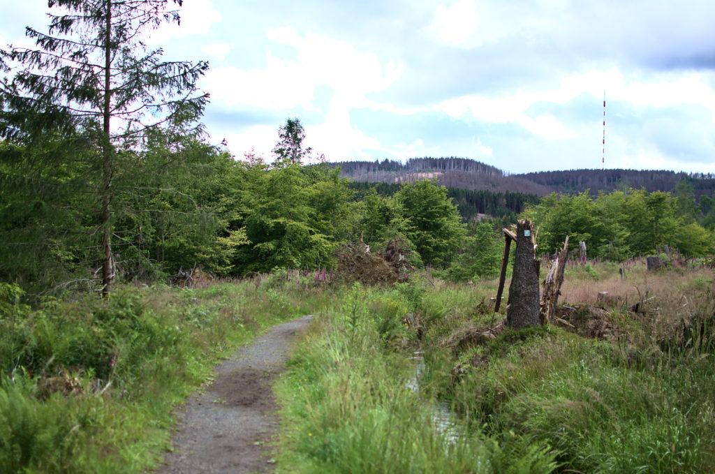 Wanderweg zum Brocken. Im Hintergrund sieht man bewaldete Berge und einen Sendemast.