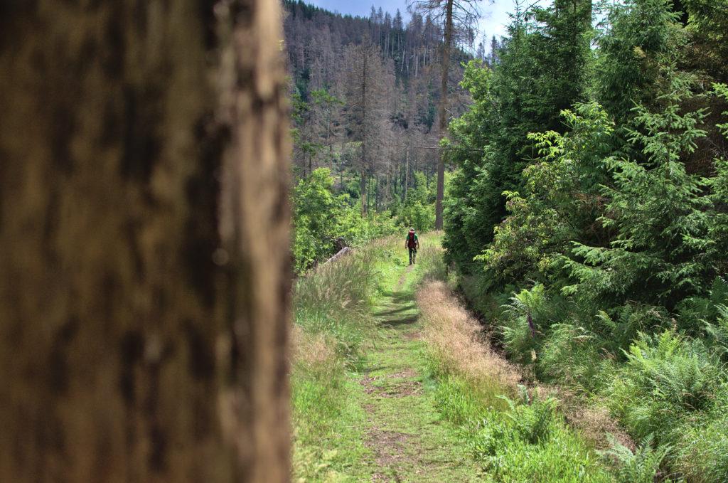 Ein Wanderweg im Wald. In der ferne sieht man einen Wanderer