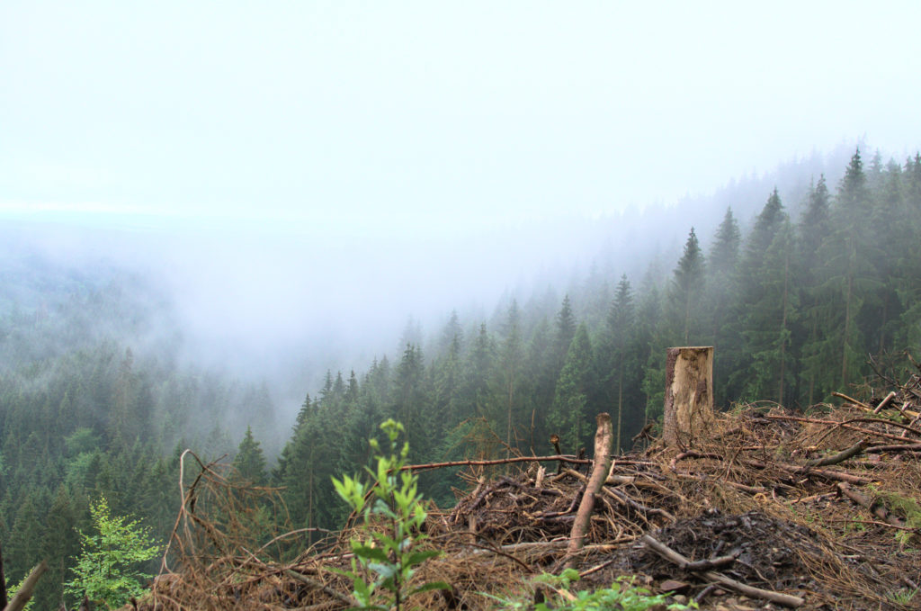 Ein nebliges, bewaldetes Tal.
